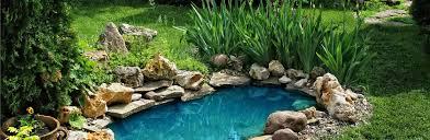 water gardens u0026 ponds u2013 jungle backyard