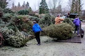 Christmas Tree Pick Up Christmas Tree Pickup And Recycling