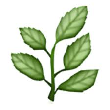 cute plant cute plant plantcute twitter