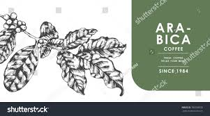 vintage coffee leaf banner advertising by stock vector 700700578