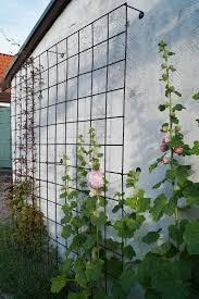 Support For Climbing Plants - cable wires mounted between fence posts create a sturdy support