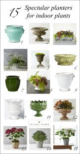 Beautiful House Plants The Best And Most Beautiful House Plants For Cleaner Air