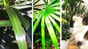 top 11 air filtering houseplants lauzon flooring