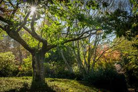 forest glade gardens mount macedon u2013 john mitchell photography