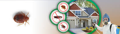 Bed Bug Cleaning Services Bed Bug Control In Dubai Bed Bug Pest Control Company In Dubai