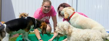 wee little paws inn dog boarding and daycare for all dogs 18