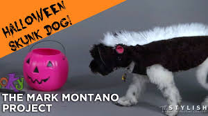 skunk dog costume diy youtube