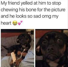 Sad Dog Meme - 2183 best who doesn t love dogs images on pinterest doggies