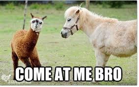 Alpaca Meme - come at me bro funny horse meme image