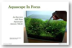 Aquascape Layout Aquascaping World Magazine Interview With Antonio Nikolic