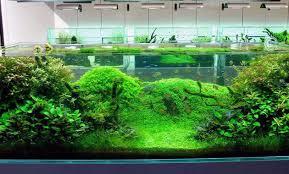 Aquascape Choosing The Right Fish For Aquascape Nature Style Aquascaper