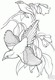 birds caricature magpie bird magpie coloring pages for kids