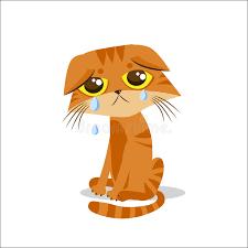Cartoon Cat Memes - sad crying cat cartoon vector illustration crying cat meme cat