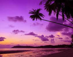 Palm Tree Wallpaper Wallpaper Thailand 4k 5k Wallpaper Beach Palms Shore Sunset
