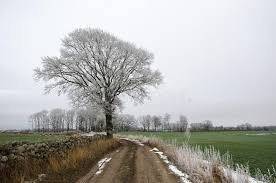 frosty tree by a country road stock photo image 65432585
