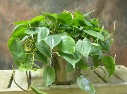 12 houseplants that can survive even the darkest corner
