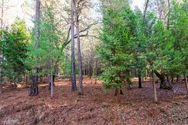 anyone in nevada county looking to build an affordable cabin sized building in nevada county makes a resurgence sierra lifestyle team