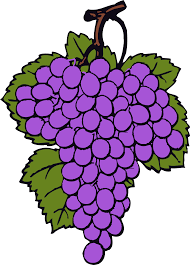 free wine grapes clipart image 12094 wine grapes clipart free