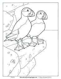 fun kids coloring pages birds book one educational fun kids coloring pages and preschool