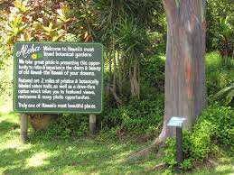 Fairchild Botanical Garden by Ever Seen A Tree Made Of Rainbows Here U0027s One Simple Thing