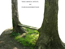 natural tree bench stock 2 by fairiegoodmother on deviantart