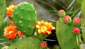 shade loving native plants top 10 bird plants in central arizona audubon arizona