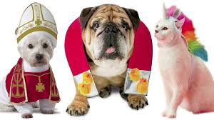 20 hilarious halloween costumes for pets chicago tribune