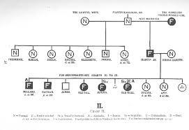 family tree template pedigree chart