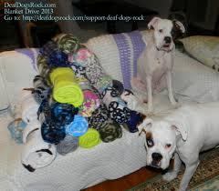 adopt a shelter dog month u2013 blanket drive u2013 deaf dogs rock