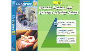 tissues organs and systems of living things ppt download