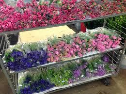 san francisco florist debra prinzing post flowers podcast san francisco flower