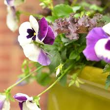 4 festive ideas for fall container gardening how to decorate
