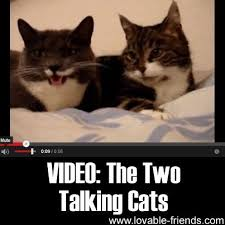 Talking Cat Meme - video the two talking cats kitties pinterest talking cat cat