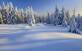 winter trees beautiful winter blue nature forest sky hd