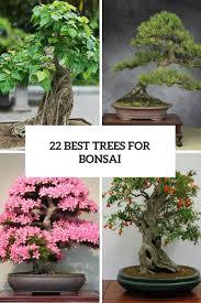 best 25 indoor bonsai tree ideas on pinterest indoor bonsai