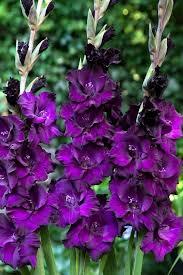 Summer Flower Garden Ideas - 364 best afrocentric theme garden ideas images on pinterest