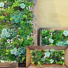 how to make a green wall using succulents brooklyn roof garden