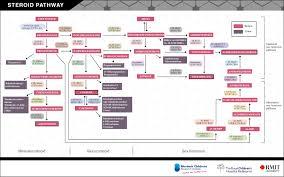 harmonisation of serum dihydrotestosterone analysis establishment