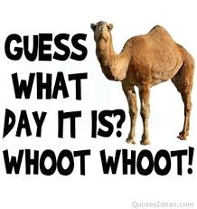 Dirty Hump Day Memes - funny hump day quotes and hump day meme dirty happy hump day 34