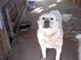 american eskimo dog in india different breed pet dog for sale in india youtube