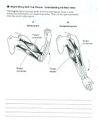 muscular system diagram blank image collections human anatomy