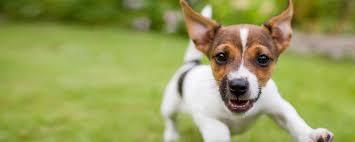 Asheville Veterinary Hospital Pet Vet On Patton