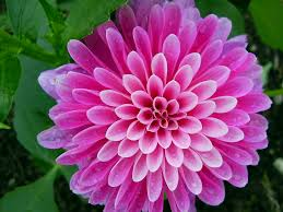 Flower Delivery Free Shipping Send Flowers To India Send Flowers To India Flowers Delivery