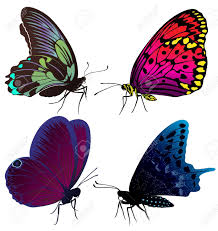set of color butterflies of tattoos royalty free cliparts vectors