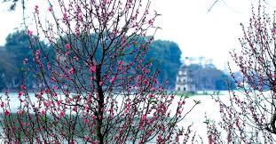 Flower Garden Hanoi by The Reason To Go To Hanoi In Spring P1 Hanoi Tourist Hanoi
