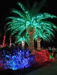 a florida christmas tree yep i u0027m going to love being in florida