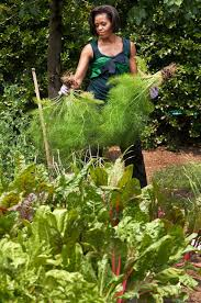 a look back at michelle obama u0027s vegetable garden over the years
