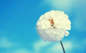 white flower white flower 7031301