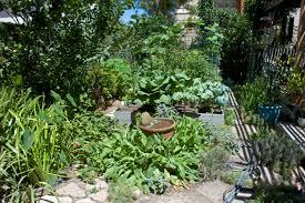 my southern california garden in august lou murray u0027s green world