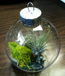 living ornaments mini terrariums make wonderful decorations